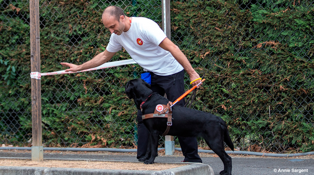 dressage chien d'aveugle