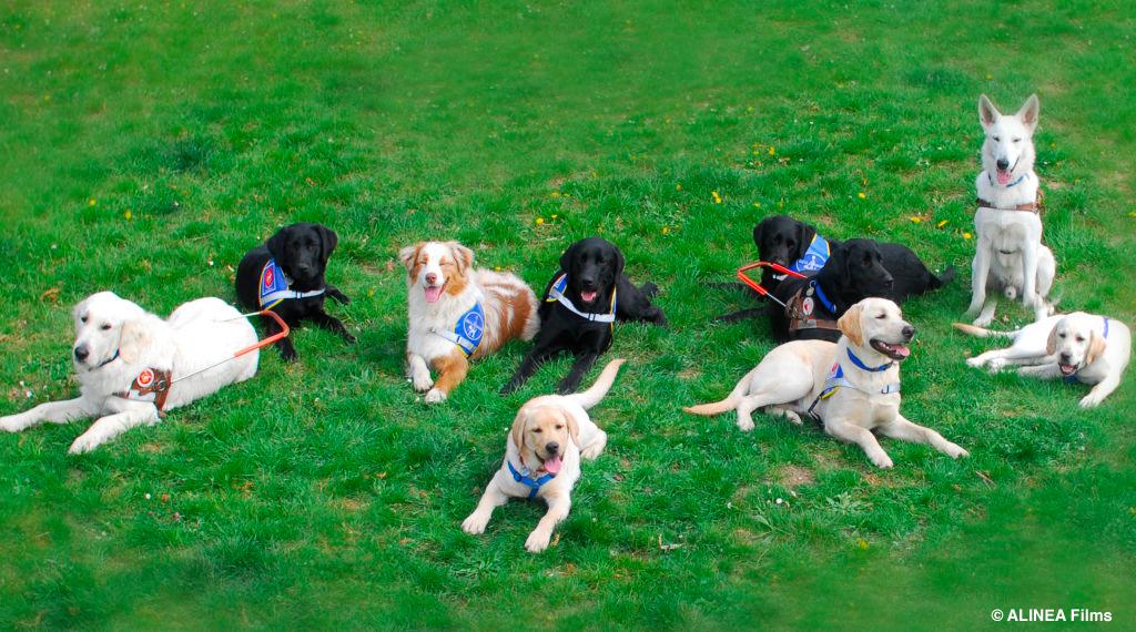 Clicker Chien - 10 techniques à savoir - Comme les pros - Guide du chien