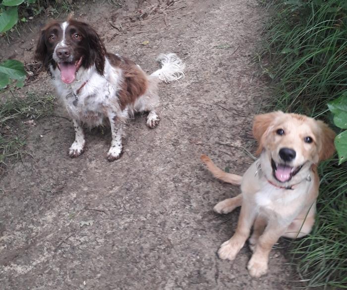 Ohara et Ermione assises en forêt