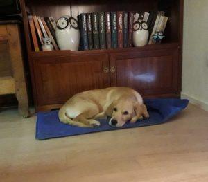 Ohara couchée sur le tapis rafraîchissant