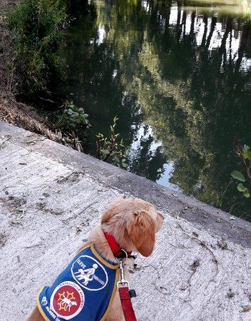 Ohara, assise de dos face au canal du Midi, regarde l'eau