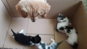 Ohara regarde 3 chatons dans un carton
