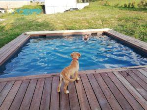 Ohara au bord de la piscine qui regarde Pauline, sa famille d'accueil, nager