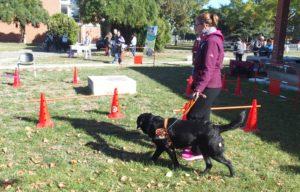 Une éducatrice et son chien réalise une démonstration de guidage.