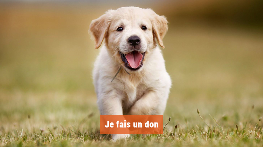 Chiot courant dans l'herbe