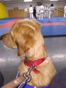 Ohara fait une sortie au club de judo