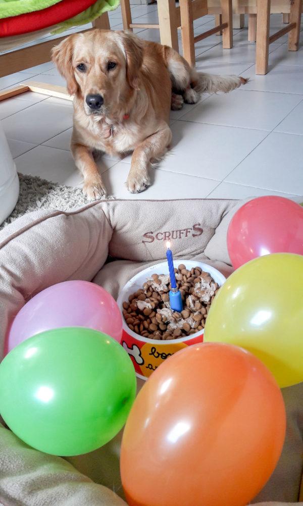 Ohara reçoit une gamelle de croquettes avec une bougie entourée de 5 ballons