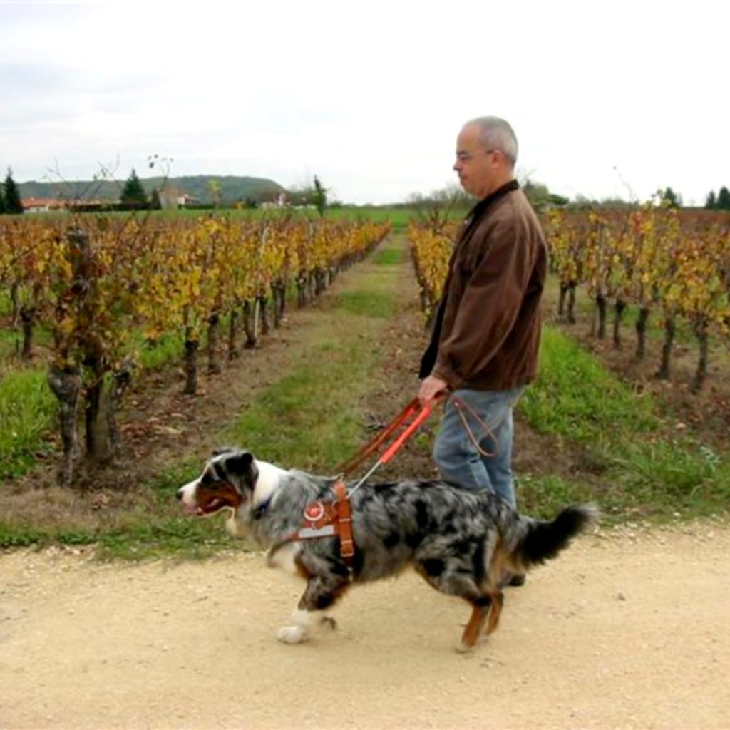 Bruno et Emir se promènent sur un chemin au milieu des vignes