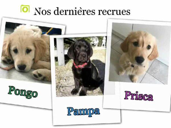 Dans 3 petites vignettes du type photo polaroïd, on retrouve Pongo, Pampa et Prisca