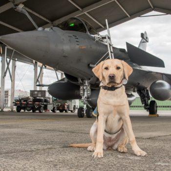 Oasis, élève chien guide, assise deavant un Rafale de l'Armée de l'Air française