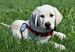 Phinn est couché dans l'herbe