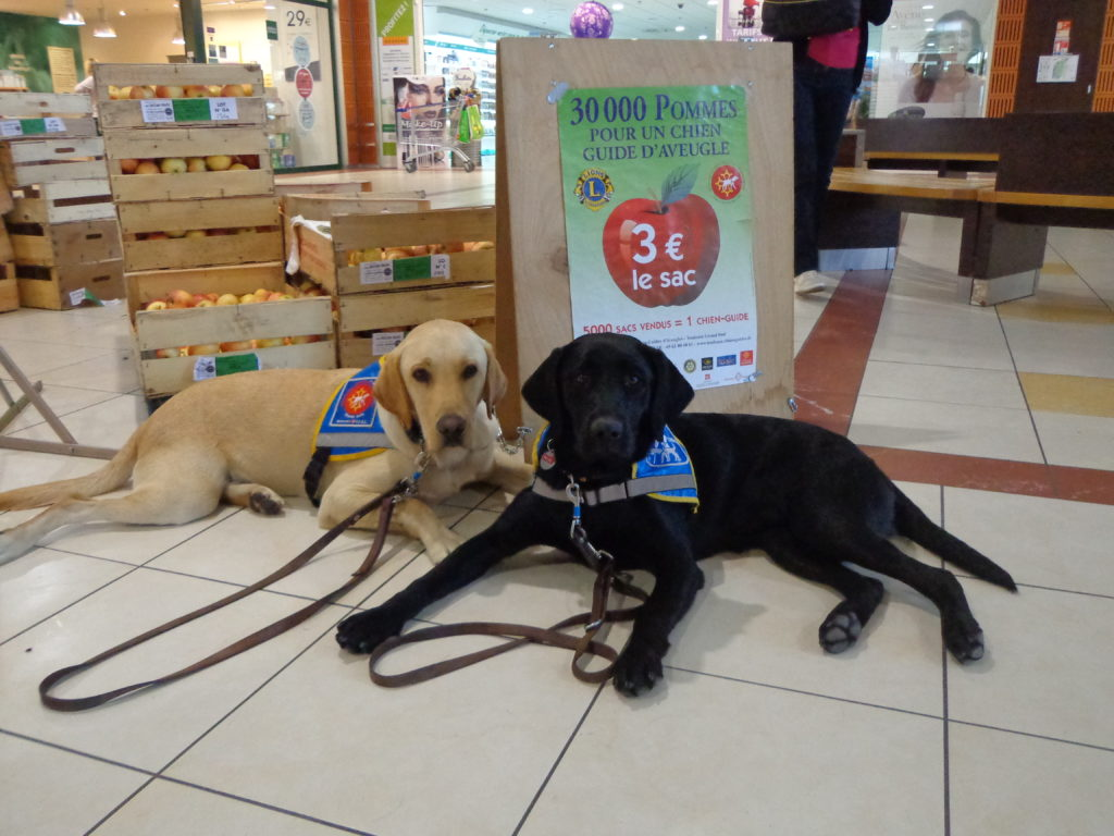 2 chiens guides devant le stand de vente de pommes