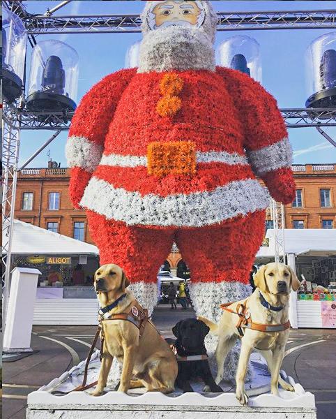 3 furturs chiens guides assis devant le grand père noël du marché de Noël de Toulouse