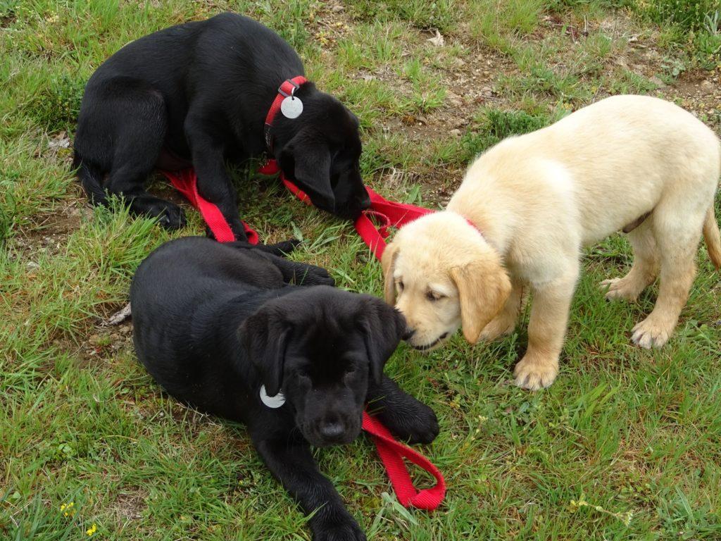 Rafale, River et Raffy tous les trois dans l'herbe.