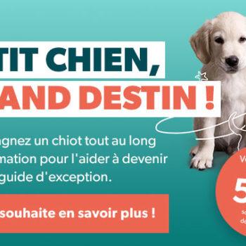Petit Chien, Grand Destin, accompagnez un chiot tout au long de sa formation pour l'aider à devenir un chien guide d'exception. Votre soutien à partie de 5 euros/mois