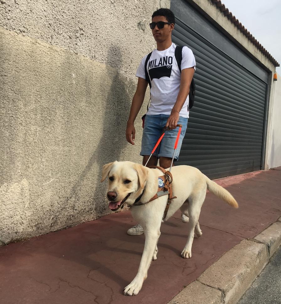 Mr Merzouk et Nelson, son chien guide, se déplaçant sur le trottoir