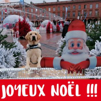 """Un élève chien guide a les 2 pattes avant appuyées contre une barrière. A côté de lui, un Père Noël en carton s'appuie lui aussi contre la barrière. Ils sont entourés de sapins décorés. Sur la phot est écrit """"Joyeux Noël"""""""