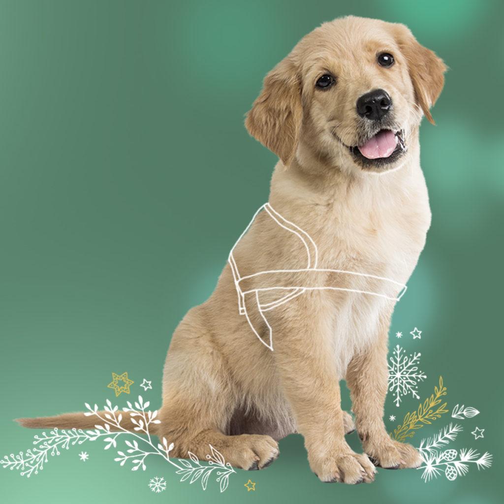 Un chiot est assis. UN petit harnais de guidage est dessiné afin de montrer sa grande destinée : celui de devenir chien guide