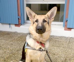 Portrait de Raya assise sur la terrasse avec son gilet d'élève chien guide