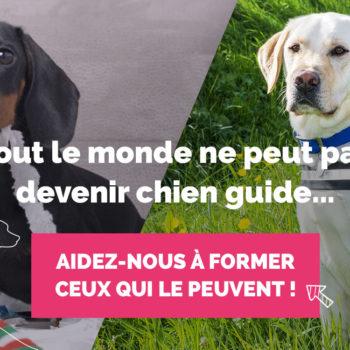image d'illustration de la campagne : à gauche un chien mangeant du papier. A droite unchien guide assis portant son harnais. Il est assis sagement dans l'herbe. Le texte suivant est écrit : tout le monde ne peut pas devenir chien guide. Aidez-nous à former ceux qui le peuvent !